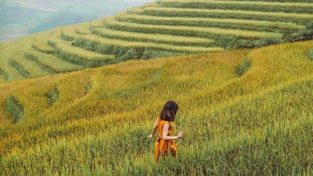 Vietnam is wonderful in ripen rice season 3