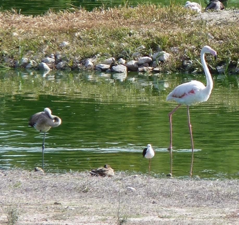 Birding Axarquia September 2014