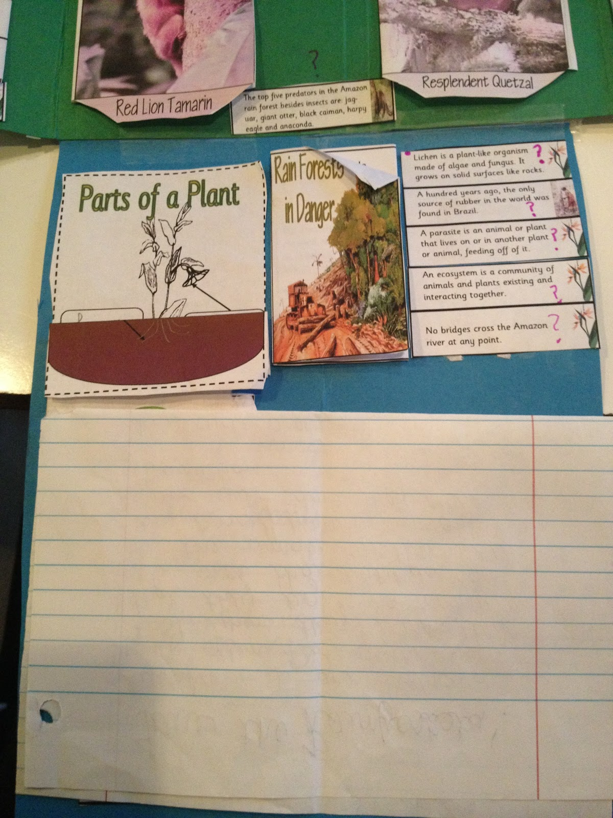 Learning In Grace Rainforest Lapbook Unit Study 5th Grade