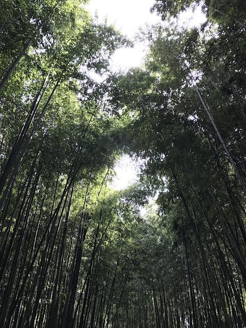 sound of wind bamboo grove Juknokwon