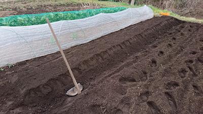 土を被せて1畝完成!