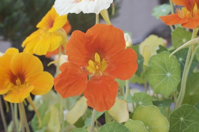 Vidadomo Flores Que Se Comen