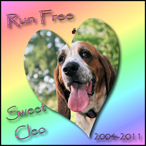 Cleo - Rainbow Bridge