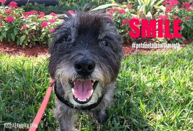 oz smile for pet dental health month