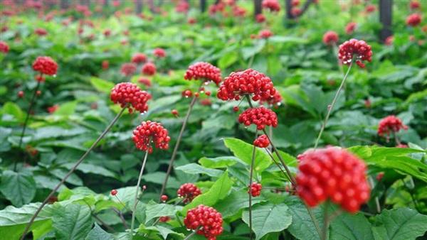 أنواع النباتات ، الفوائد الغذائية
