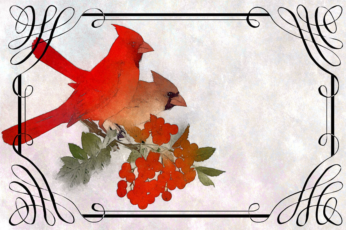 Fabulous image pertaining to free printable pictures of cardinals