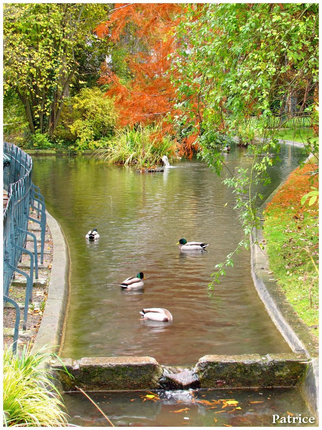 Blog Photos de Patrice: Promenade à Grenoble, jardin des plantes.