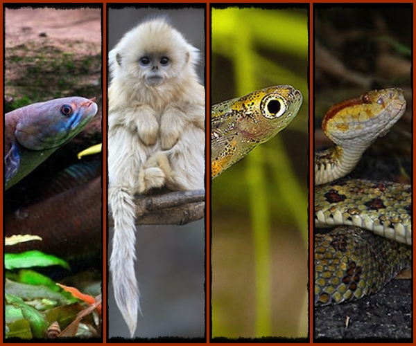 https://bio-orbis.blogspot.com.br/2015/10/novas-especies-world-wildlife-fund-wwf.html