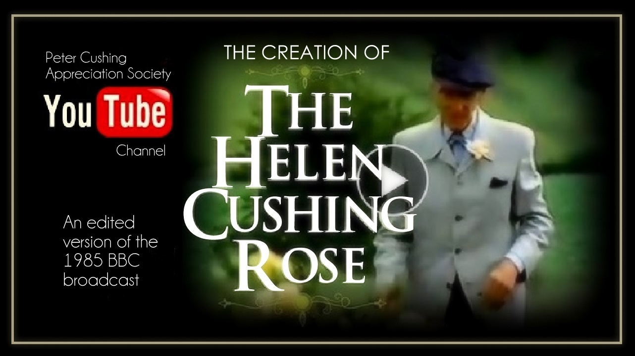 THE STORY OF THE HELEN CUSHING ROSE