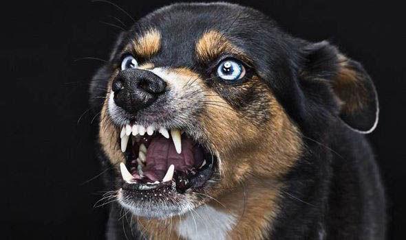 Penyakit Anjing Gila(Rabies)
