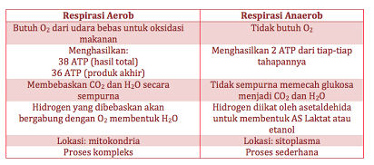 Perbedaan Respirasi Aerob dan Anaerob Pada Makhluk Hidup
