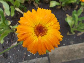Botanischer_Gartenin_kukkaloistoa