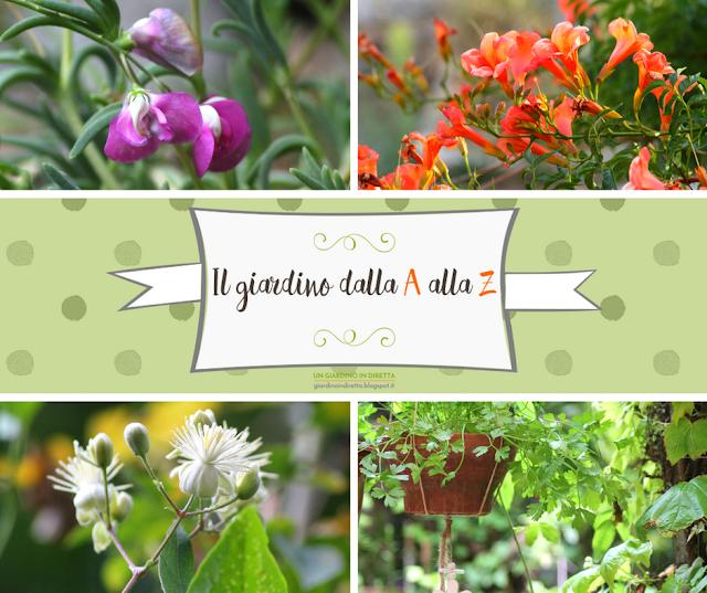 il giardino dalla A alla Z -  i fiori della settimana - un giardino in diretta