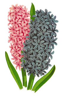flower floral hyacinth digital download image transfer clipart