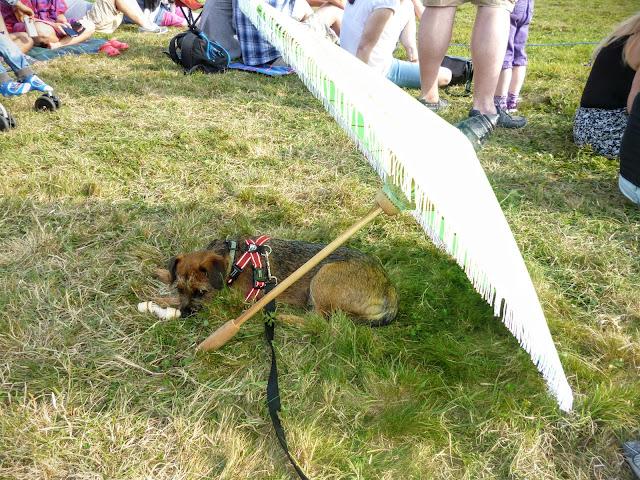 dog under a sunshade