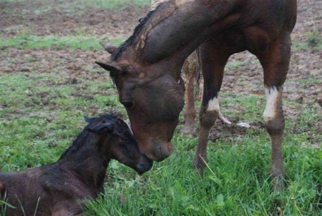equitazione bambini cavalli