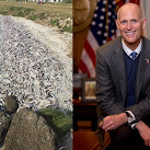 Florida Gov. Rick Scott Applauds Agencies' Response To Indian River Lagoon Fish Kill