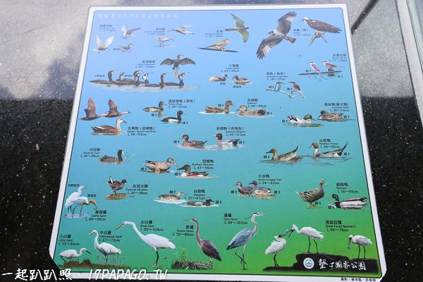 不同的季節可以觀賞到數十種不同的野鳥