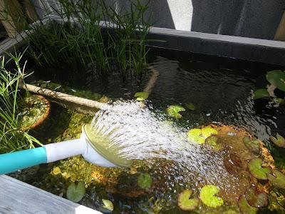 足し水 メダカ ビオトープ 水換え
