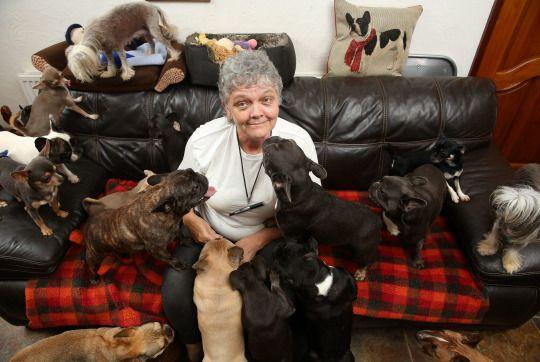 ये महिला घर में पाल रही है इतने सारे कुत्ते... - newsonfloor.com