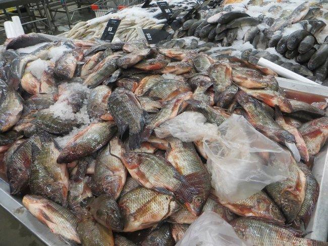 Самая дешевая рыба в Таиланде