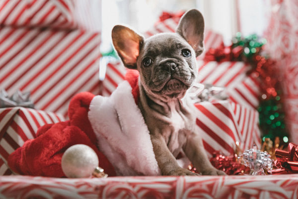 Tips for Using CBD for Pets When Traveling During the Holidays