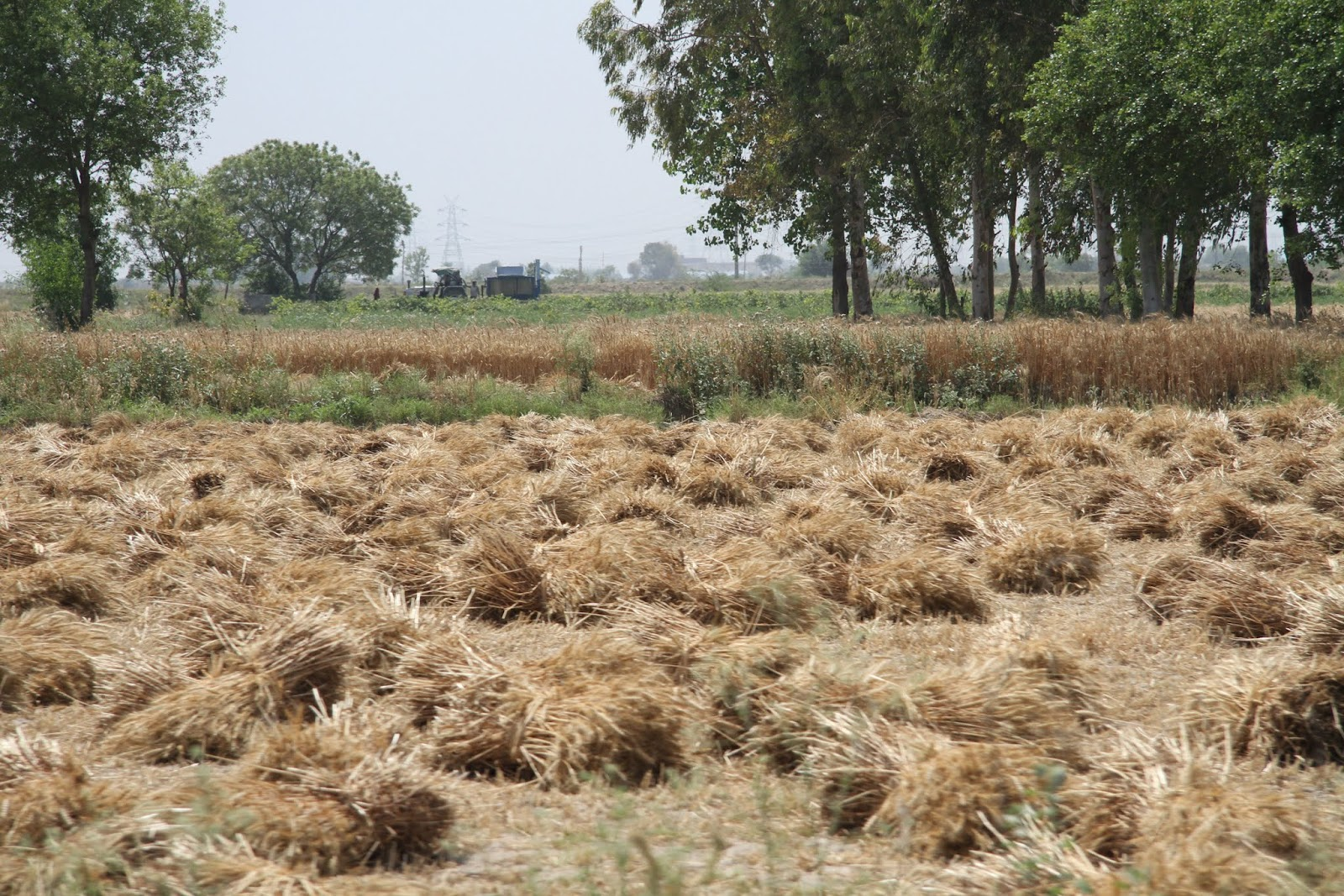 Organically grown crops do not a cropping system make and