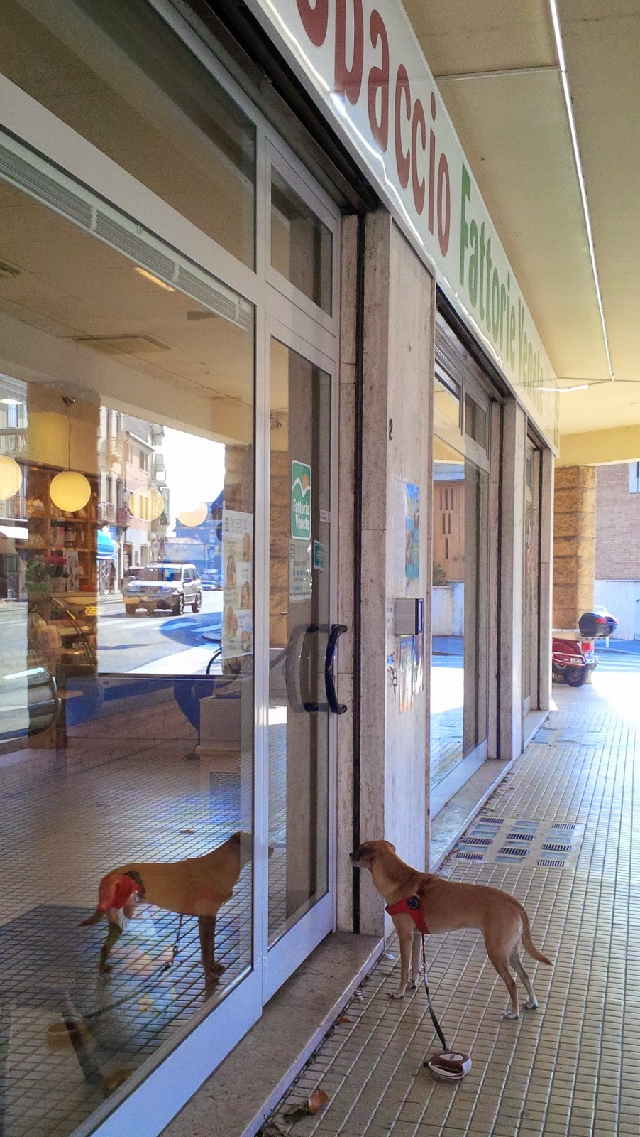 A dog waits patiently for his master in front of a local deli