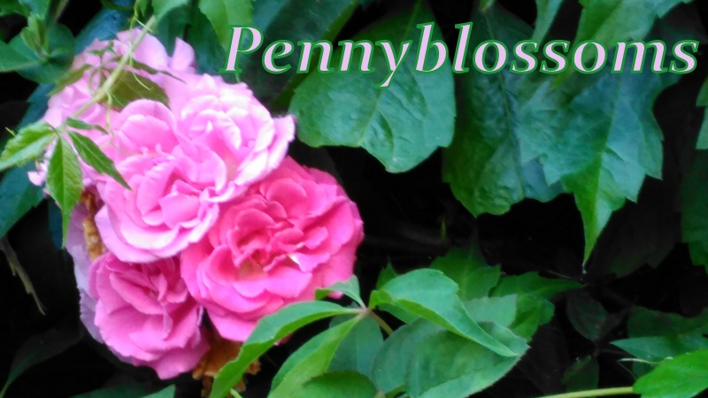 Pennyblossoms