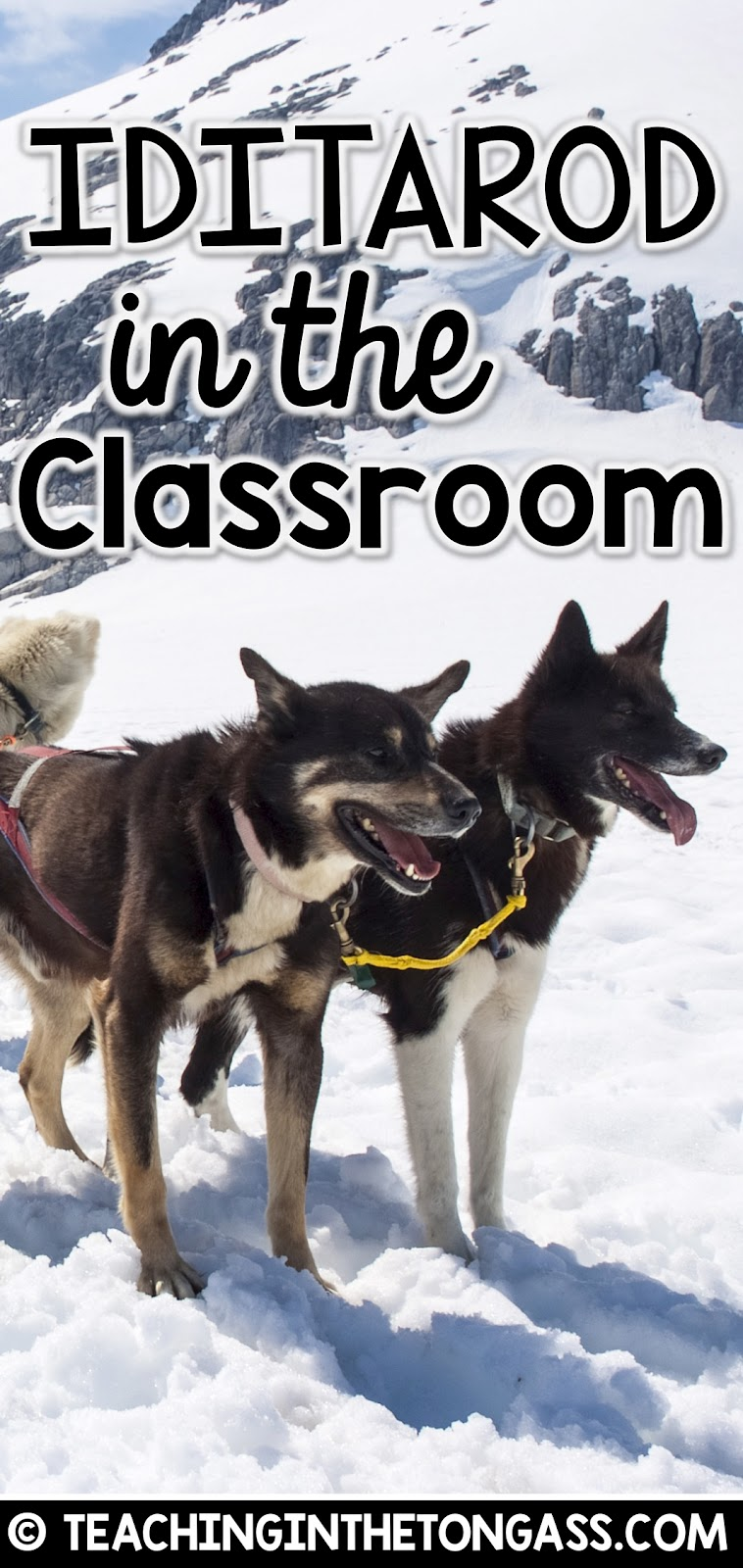 Iditarod Activities for kids