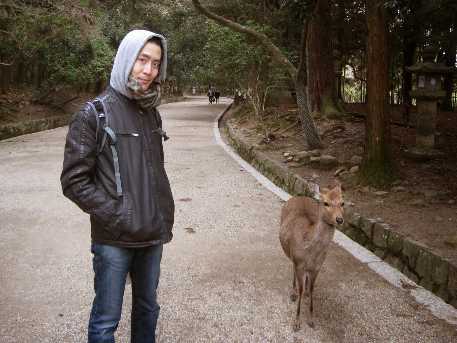 Kyoto - Deer on the grounds of Kasuga-taisha Shrine