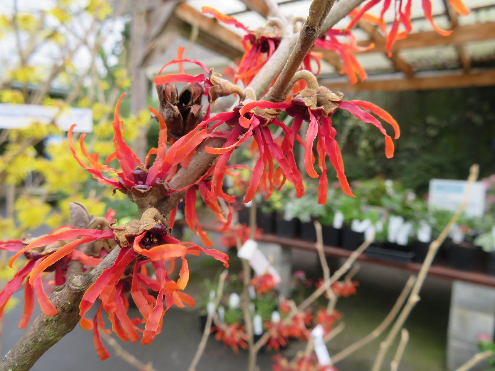Nursery Visit: Xera Plants, Spring Edition