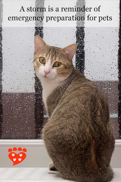 Prepare pets in case of emergency, as a cat sits on a windowsill safe from the storm