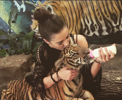 Actress Amy Jackson tweeted a photo showing herself feeding a tiger cub on Wednesday.   Though she did not disclose where the photo was taken, it was probably at the famous Tiger Temple in Thailand, where tourists pay a fee to feed tiger cubs with milk bottles.   Amy was in Thailand this week and had been tweeting from the country.