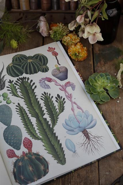 kasvikunta, mehikasvi, valokuvaus