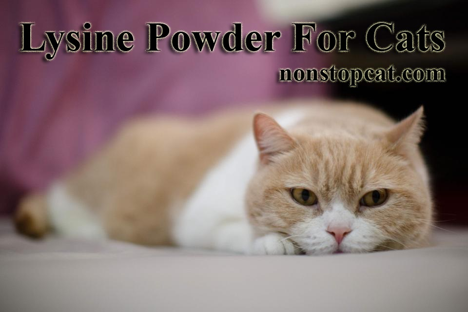 Lysine Powder For Cats