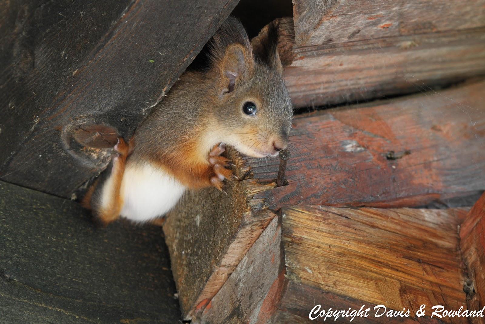oravan pesä talossa