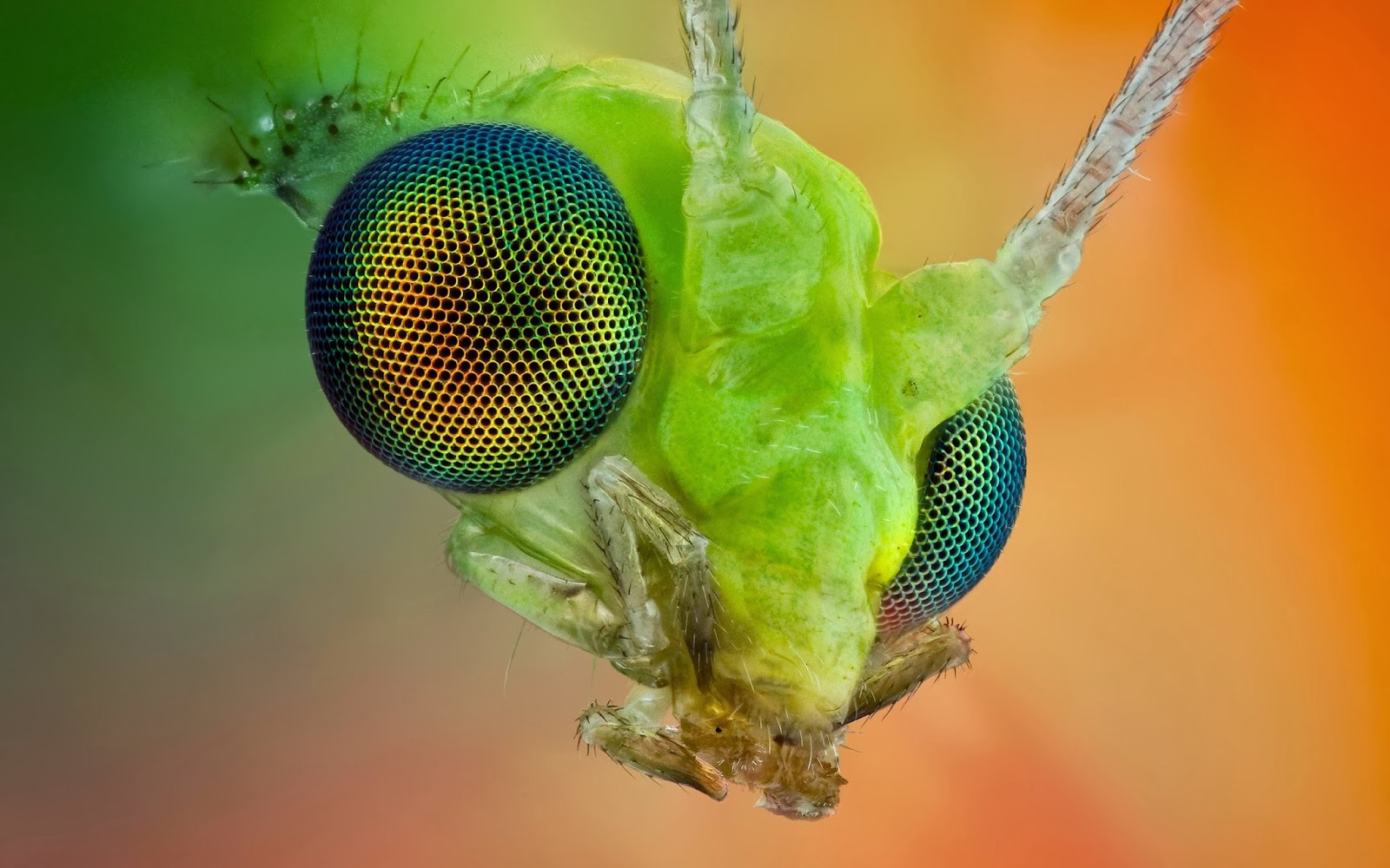 Insect HD Funny Wallpapers ~ Funny Wallpapers