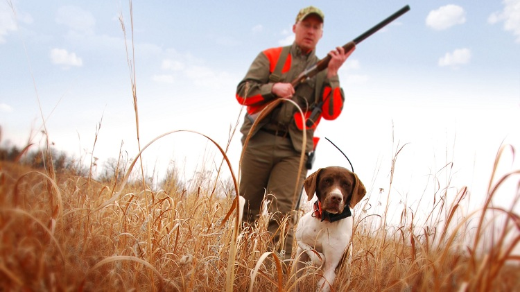 Hunting Dog Training Collars