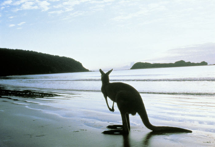 Summer Trip to Kangaroo Island in Australia