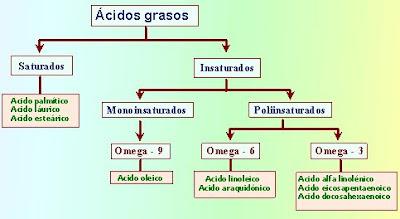 Clasificación de las grasas. Como se clasifican las grasas. grasas saturadas. grasas insaturadas. Acidos grasos. que funcion tienen las grasas