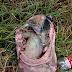 Abandonan cuerpo de bebe en un paraje de Xochimilco