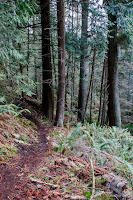 Big Cedar Trail, Deception Pass State Park