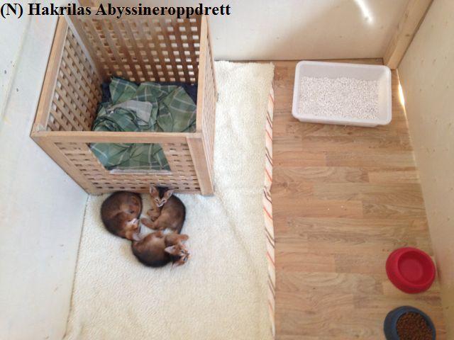 11546315c Toril sin hverdag med musikken og kattene – NOEN BILDER OG EN ...