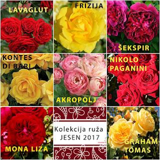 Sadnice ruza BiH, Rasadnik Ruže Majevice , Peljave