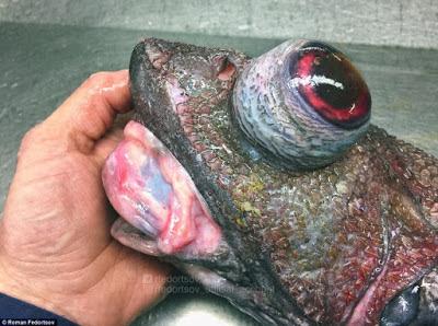 Τα «εξωγήινα» ψάρια που κολυμπούν ανάμεσά μας