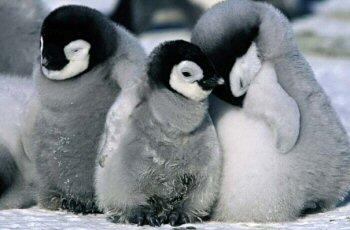 Funny Animals: Cute Penguin