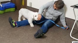 exercícios em casa com cães