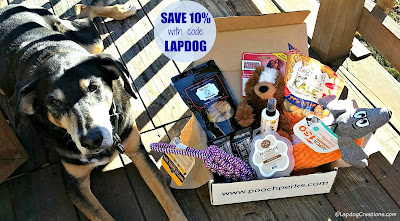 senior coonhound mix dog with Pooch Perks box