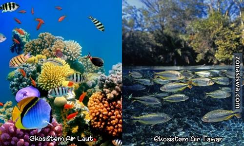 Ekosistem Perairan Pengertian Jenis Ciri Ciri Gambar